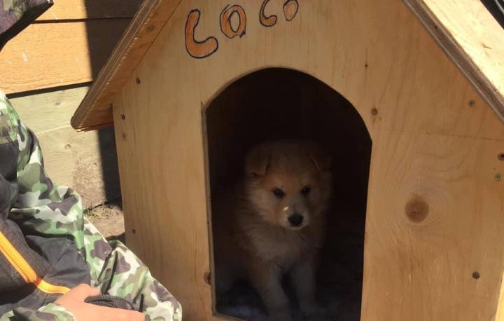 Coco essaie une niche construite par des délinquants de l'Établissement de Stony Mountain.