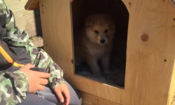 Coco tries out a doghouse built by offenders at Stony Mountain Institution.