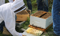 Bee Keeping initiative at Collins Bay Institution